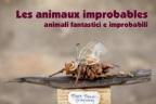 "Patrizia Donadoni - Gabriele Umiliacchi: "" Les animaux improbables"""