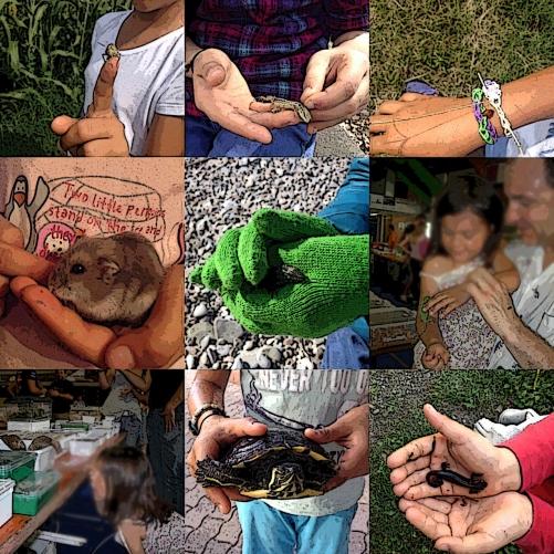 Animali e insetti