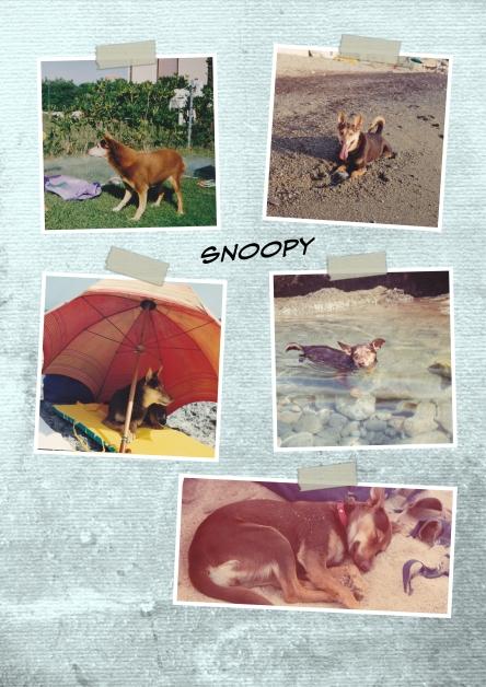Il mio Snoopy